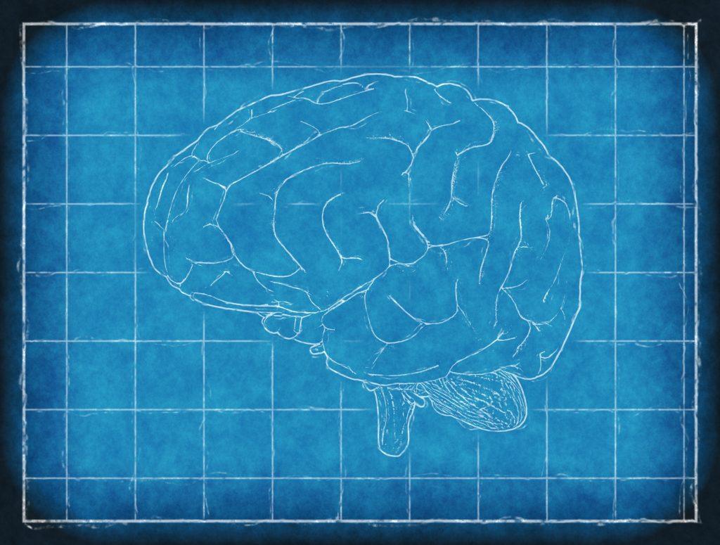 mappa funzioni cerebrali